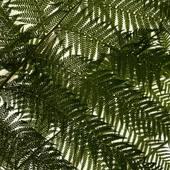 Inspiration de la nouvelle collection #palm   .  .  .  #sathyne #inspiration #palmtrees