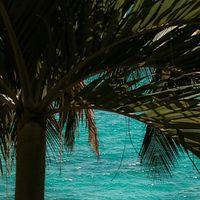 Tropical 🏝 . Mon inspiration, tropical lifestyle around the world. . Je ne m'en lasse pas, lagons, plage de sable blanc, palmier, noix de coco, eau turquoise..... une source d'inspiration inépuisable.... . . . . . . . . . . . #sathynelifestyle #ilovetravel #guadeloupe #gwada #mylovelyisland #palmtrees #palm #turquoise #lagon #lagonbleu #voyages #legosier #sathynebijoux #creatricedebijoux