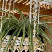 La déco les coquillages cela fait également partie de l'histoire de Sathyne pouvoir aménager son intérieur pour qu'il nous ressemble, lui apporter une âme, créer une histoire, c'est aussi ça la déco se créer un cocon pour mieux se ressourcer ….  .  .  #sathyne #decorationinterieur #coquillages #suspensioncoquillages
