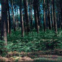 Forêt landaise 🌲 . Les couleurs ont changé, les fougères ont bruni. On a de la chance avec les pins la forêt reste verte même en hiver.... . Profitez de ce long week-end 💋 . ⠀⠀ . . . . . . . . . . . #sathynelifestyle #sathynebijoux #foretlandaise #leslandes #hossegor #foret #nature #weekendvibes #weekendenfamille #vertforet #greenforest