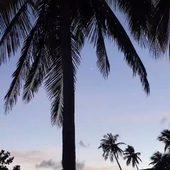 Beautiful Day  Magnifique photo de @viancasoleil un compte qui m'inspire chaque jour...  Programme du jour en rendez-vous toute la journée.... pas d'atelier aujourd'hui...  Et toi c'est quoi ton programme du jour ?  . . . . . . . . #inspiration #viancasoleil #palmtrees #tropicalvibes #mood #sathyne #sathynelifestyle