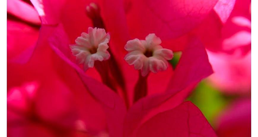 La signification du rose, couleur quartz rose